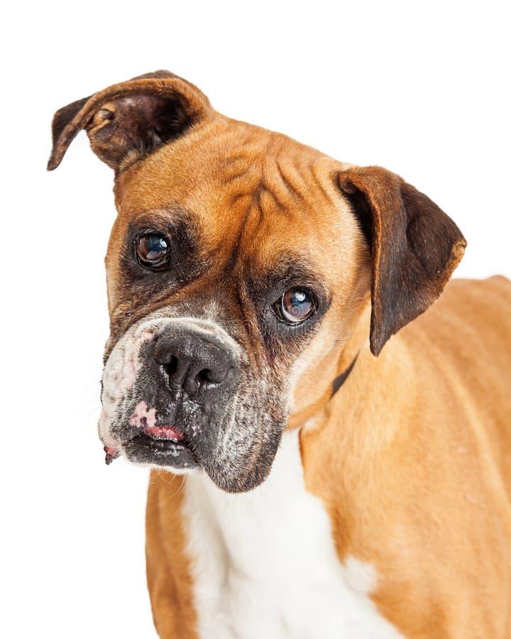 动物士狗交配_图片 包括有 题头, 小狗, 哺乳动物, 交配动物者, 特写镜头