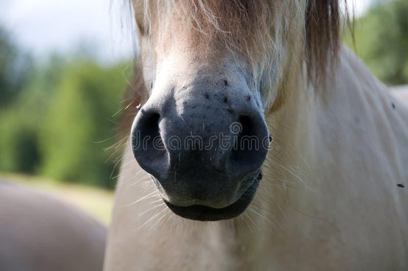 美丽的接近的马 免版税库存照片