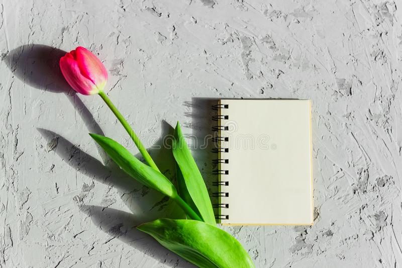 美丽的新近地被切开的桃红色郁金香和空的空白的spyral笔记本在灰色具体背景 假装与拷贝空间 免版税库存照片