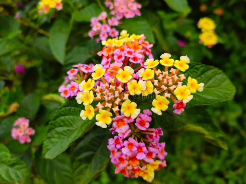美丽的新鲜的多颜色花 免版税库存图片