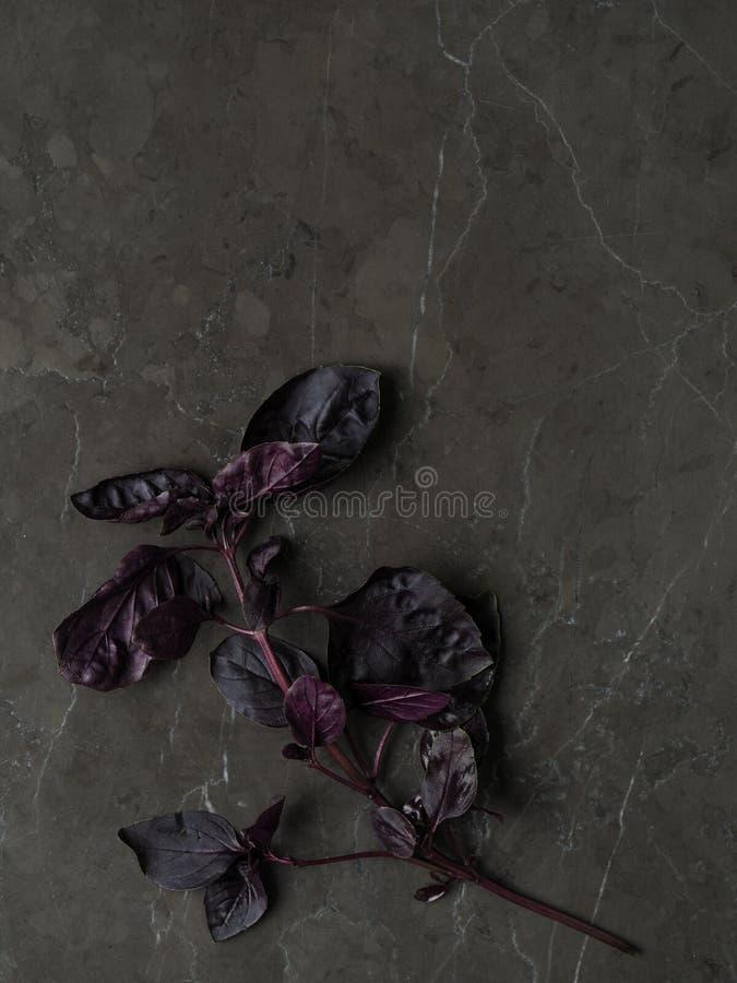 美丽的新鲜的紫色蓬蒿离开与词根在大理石背景 高定义照片 库存图片