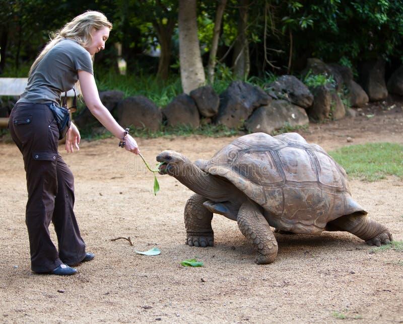 美丽的旅游妇女喂养一只乌龟 免版税库存图片