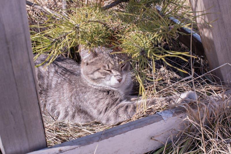 美丽的无家可归的猫在草睡觉并且取暖在阳光下在夏天 免版税库存照片