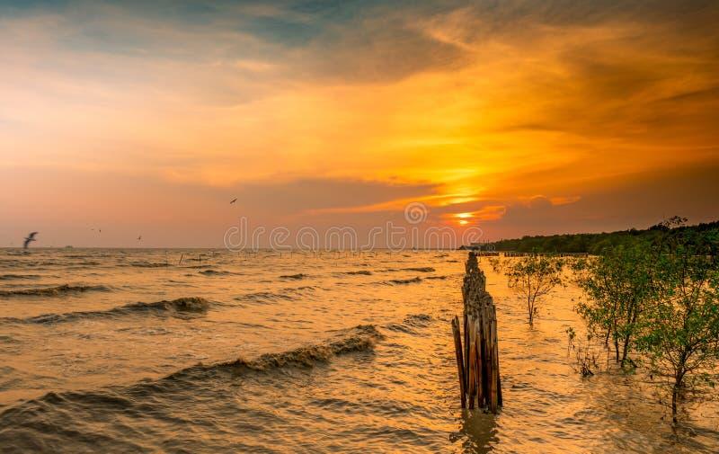美丽的日落天空和云彩在海 在丰盈美洲红树森林美洲红树生态系附近的鸟飞行 好环境 免版税图库摄影