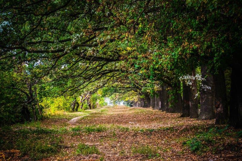 美丽的明亮的木头!风景,树,草,离开 免版税库存图片