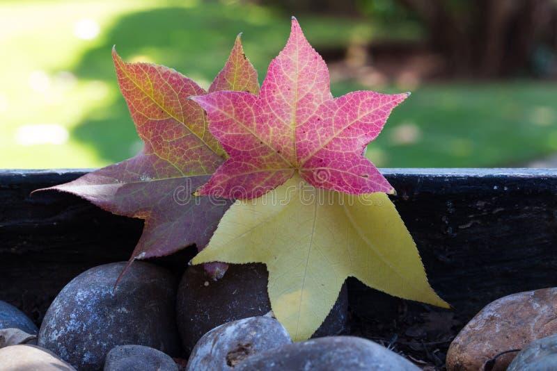 美丽的明亮的秋叶 免版税库存照片