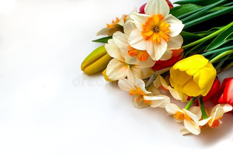 美丽的春天郁金香和黄水仙 免版税库存照片