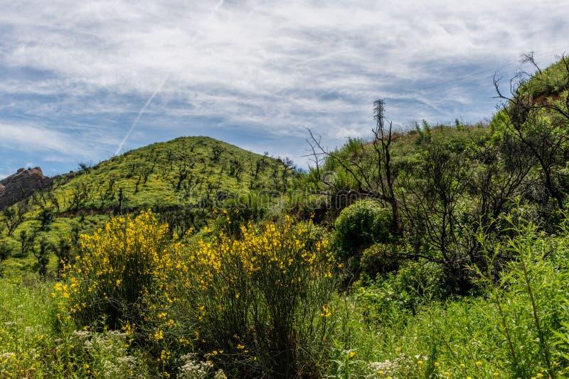 美丽的春天,加利福尼亚州的马里布美景 库存图片
