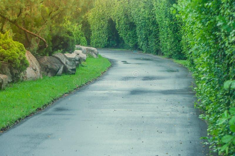 美丽的景色路或走道在公园包围有绿色自然和阳光背景 免版税库存图片