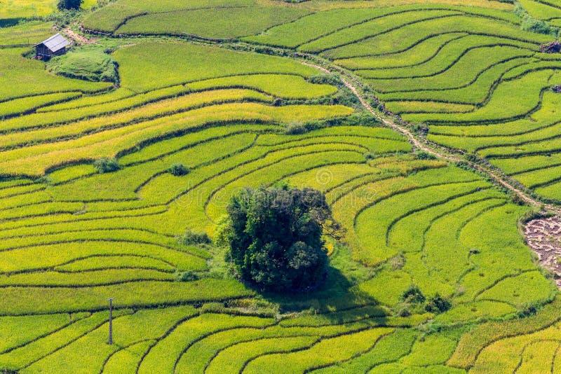 美丽的景色,米在Sapa,越南的领域大阳台 免版税库存图片