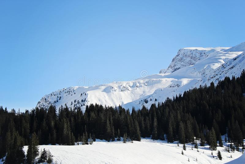美丽的杉木森林和多雪的山 免版税库存图片