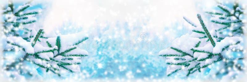 美丽的杉树盖了雪,特写镜头 冬天圣诞节贺卡全景背景,拷贝空间 假日云杉的分支 免版税库存图片