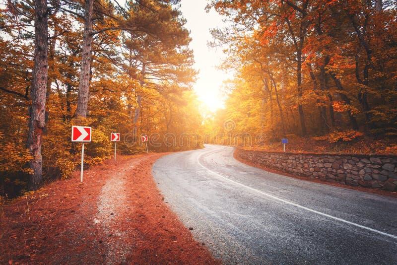 美丽的柏油路在五颜六色的日出的橙色森林里在秋天 2008克里米亚半岛山松夏天 图库摄影