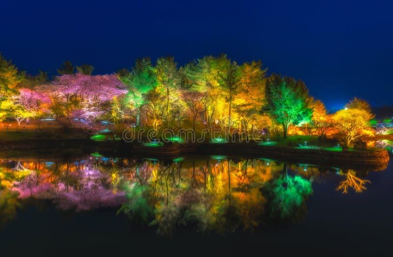 美丽的树公园的反射ningth的 库存照片