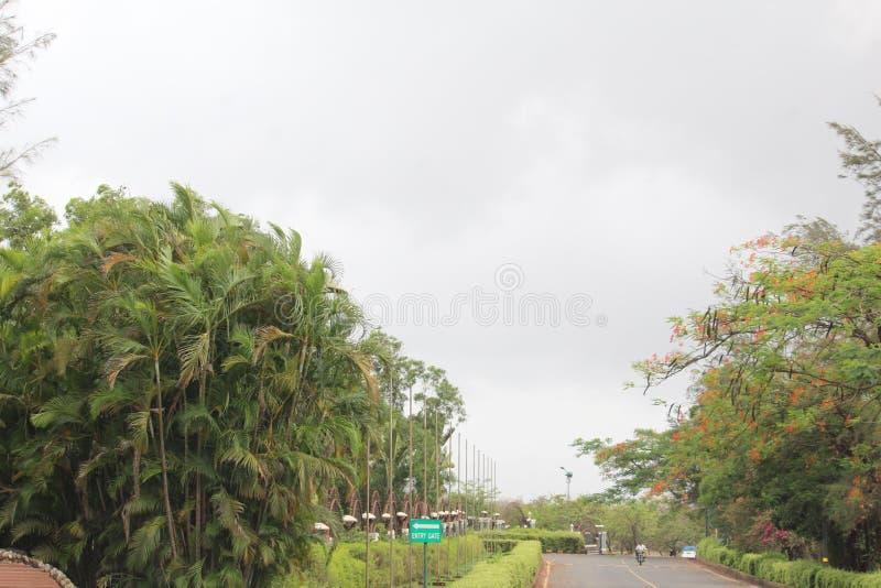 美丽的树和植物 图库摄影