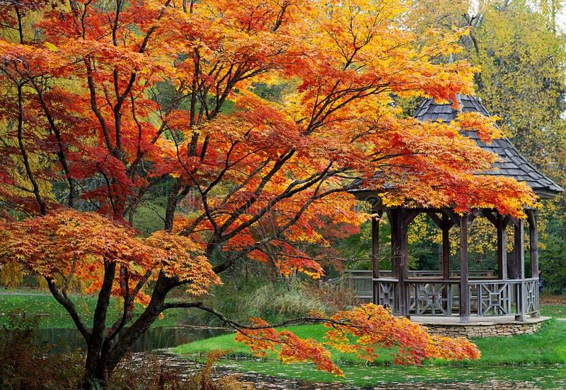 美丽的树在日本庭院里 图库摄影