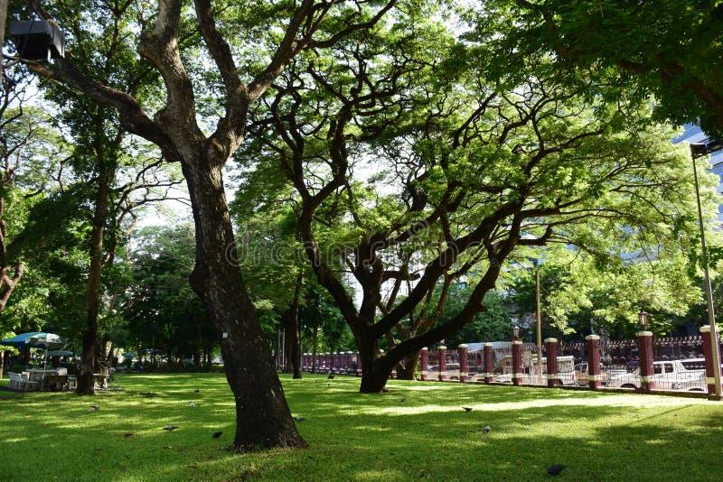 美丽的树线在绿色庭院里 库存照片