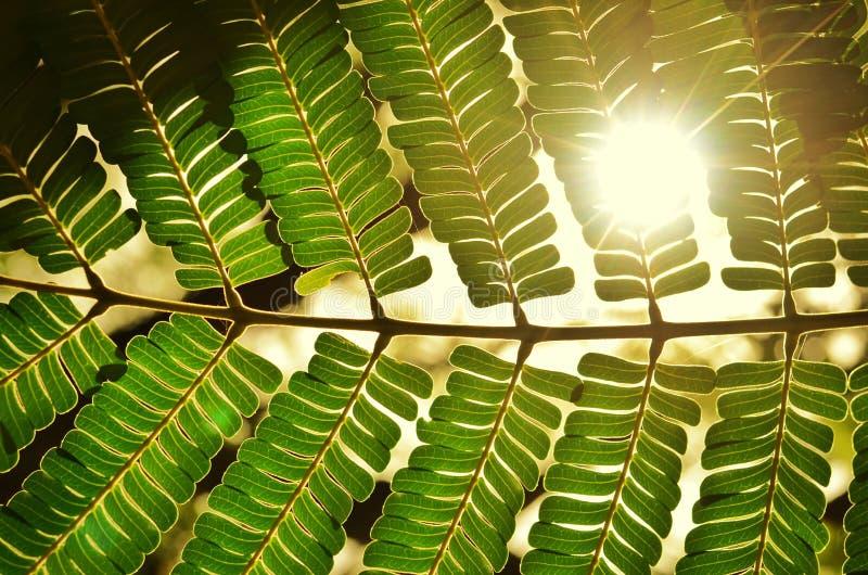 美丽的树荫 库存图片