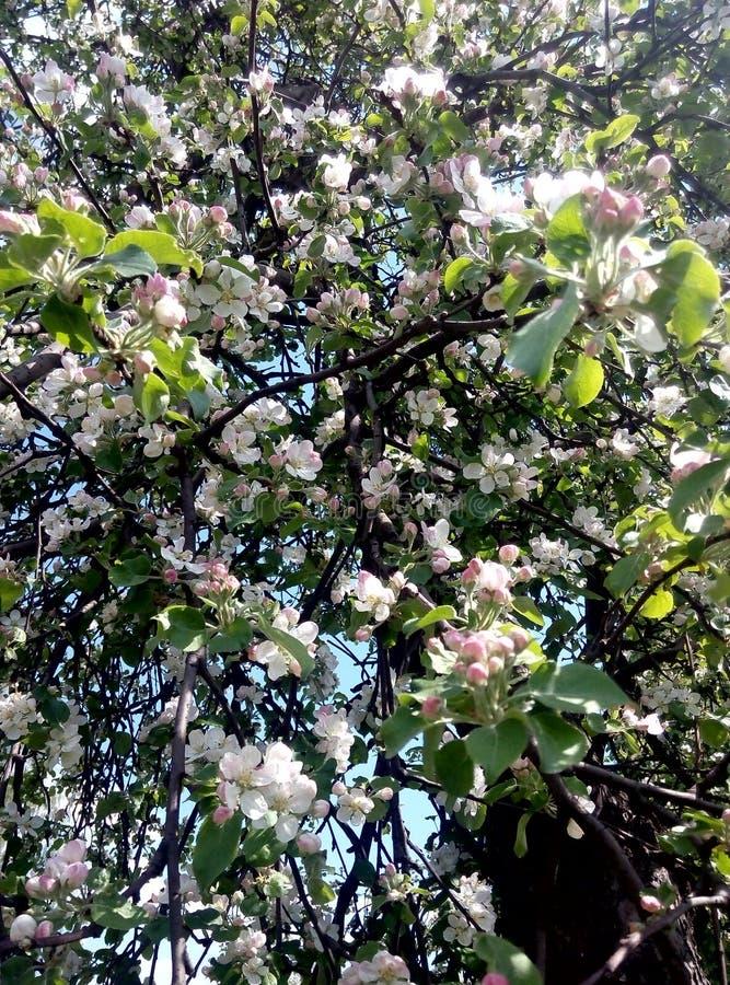美丽的树 图库摄影