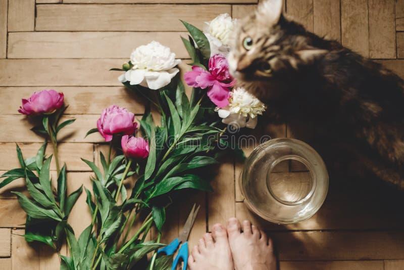 美丽的桃红色和白色牡丹和猫在土气木地板上与老玻璃瓶子和剪刀,顶视图 花卉装饰和 免版税库存图片