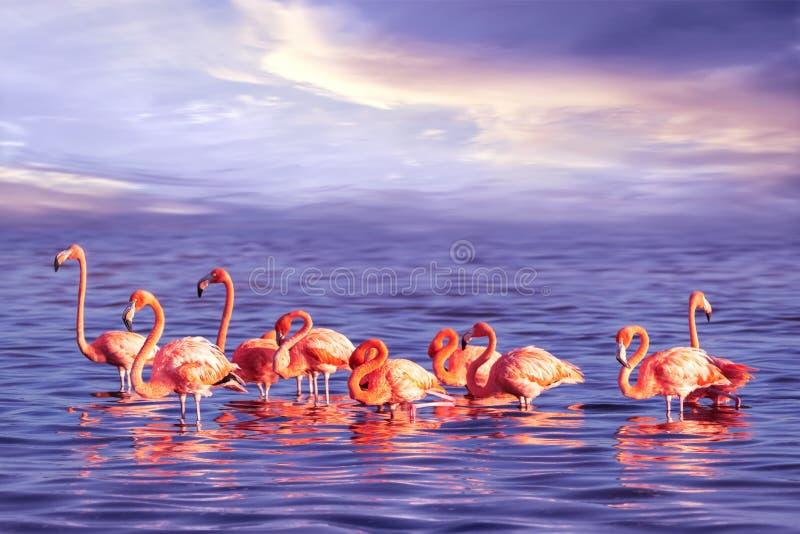 美丽的桃红色火鸟群反对紫色日落的 艺术性的海洋热带图象 免版税库存照片
