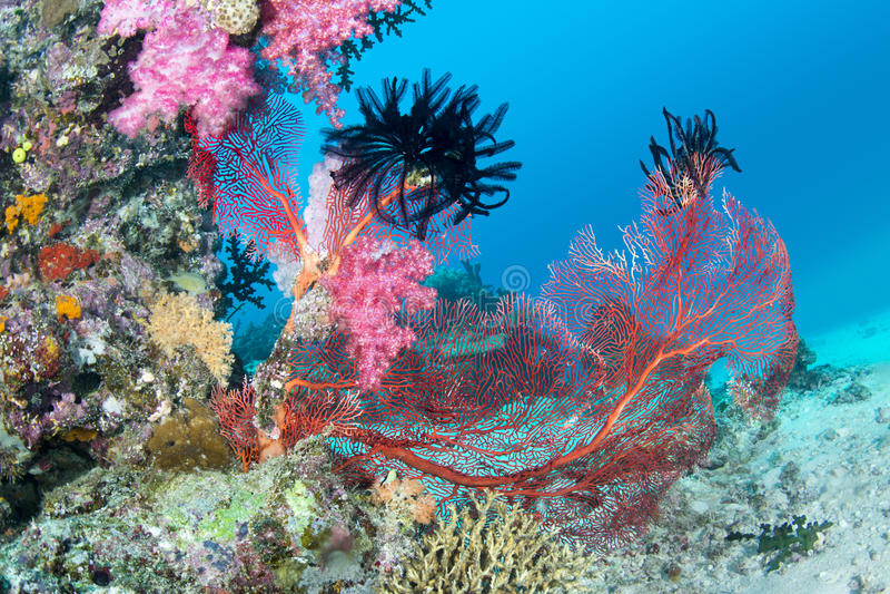 美丽的桃红色热带礁石 免版税库存照片