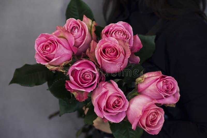 美丽的桃红色玫瑰大花束在妇女手上在灰色b 库存图片