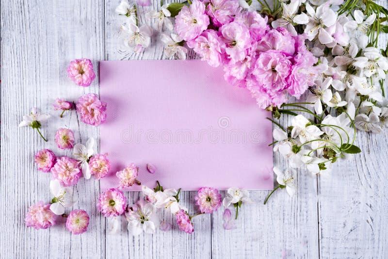 美丽的桃红色玫瑰框架  图库摄影
