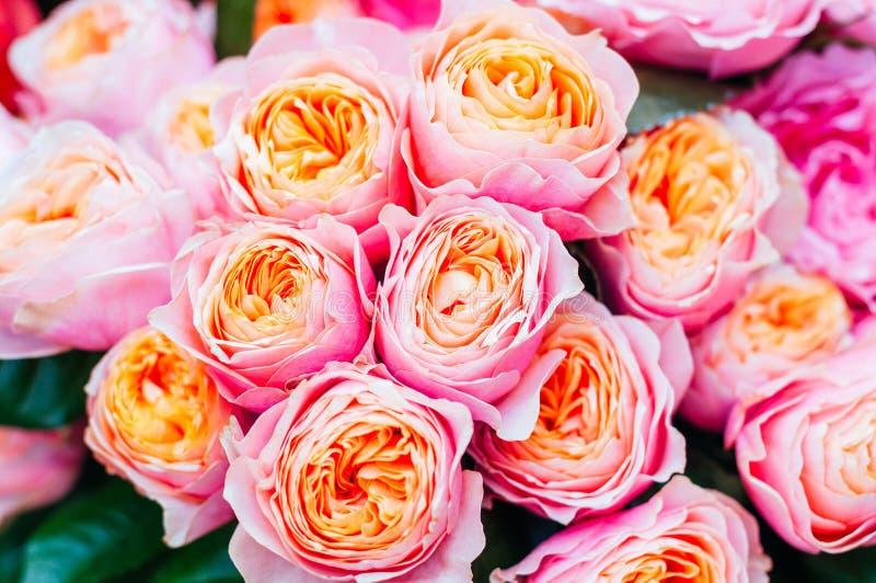 美丽的桃红色玫瑰花 免版税库存照片