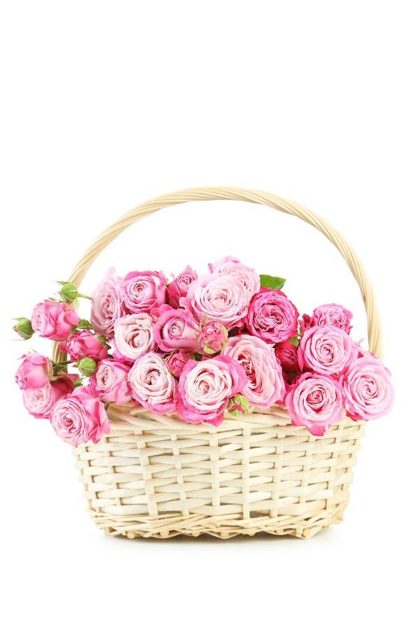 美丽的桃红色玫瑰 库存照片
