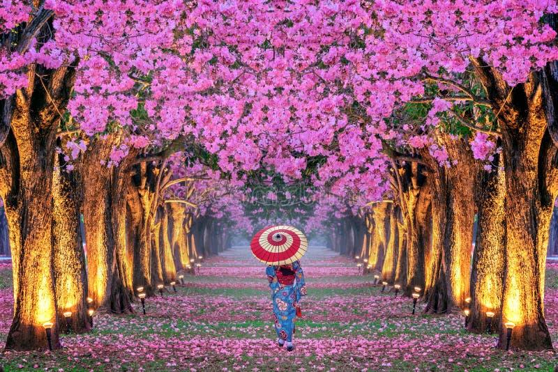 美丽的桃红色花树和和服女孩行  免版税图库摄影