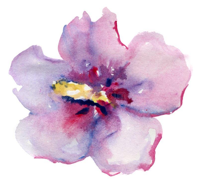 美丽的桃红色花,水彩绘画 向量例证