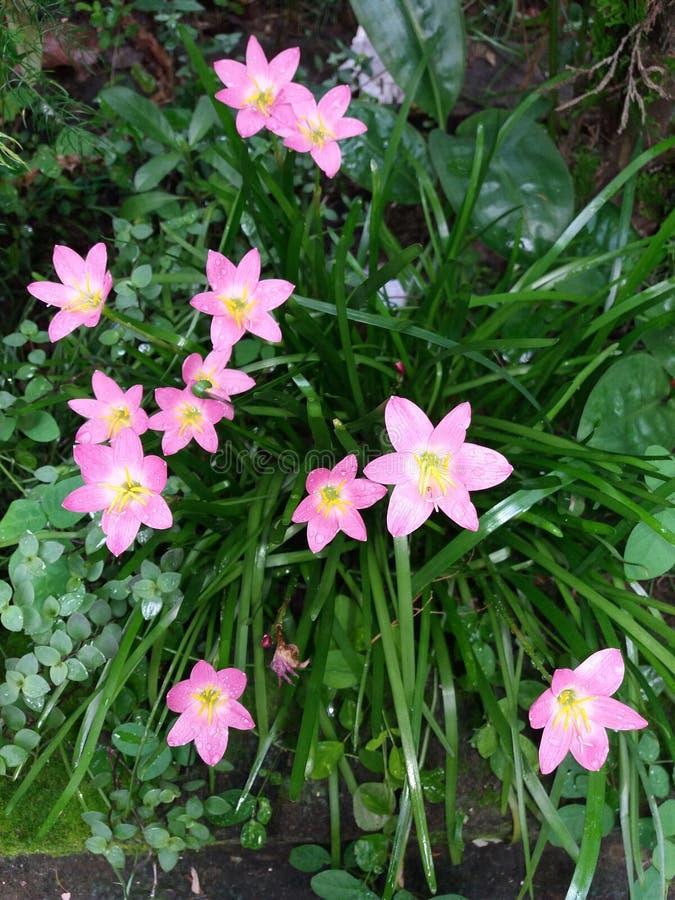 美丽的桃红色花 免版税库存照片