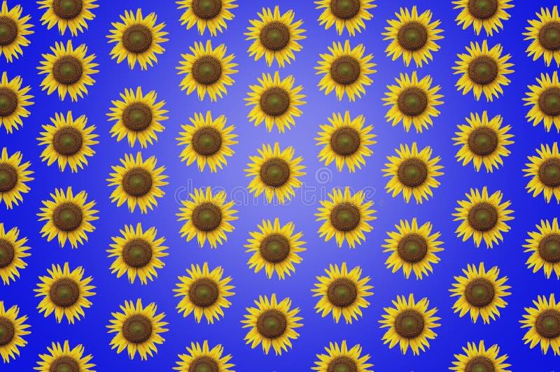 美丽的框架向日葵背景纹理墙纸 免版税库存图片