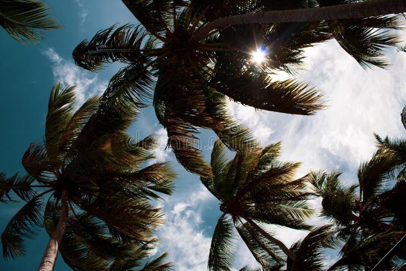 美丽的棕榈树由在狂放的多米尼加共和国的海滩的风抨击了:Playa Coson,Las Terrenas,多米尼加共和国 免版税图库摄影