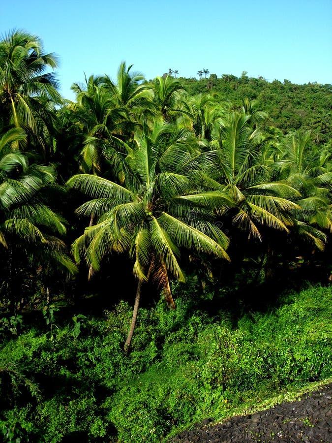 美丽的棕榈树 免版税库存图片