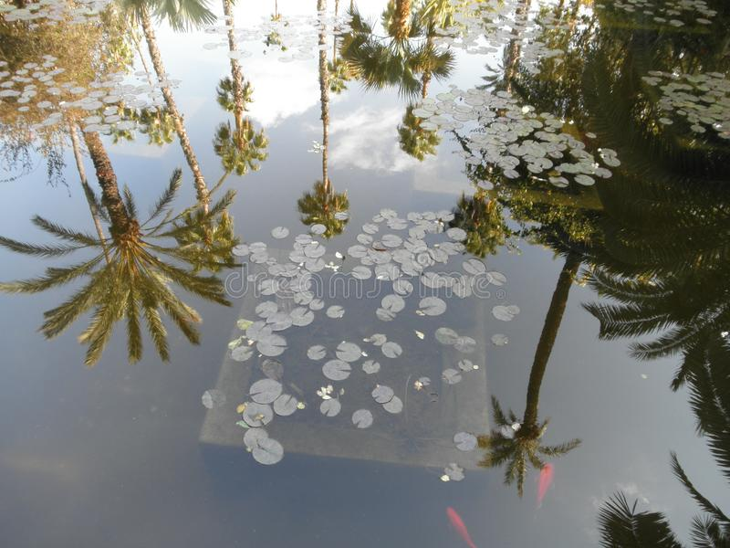 美丽的棕榈reflet在水中 免版税库存照片