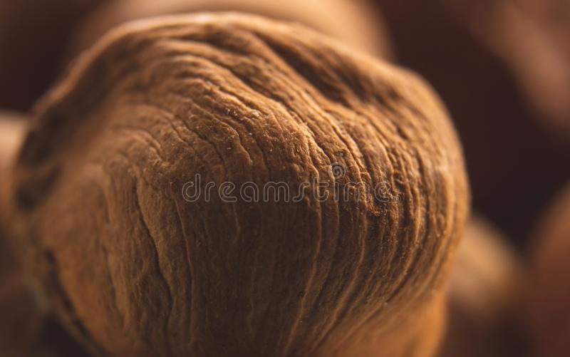 美丽的棕色和成熟榛子宏观照片  免版税库存照片