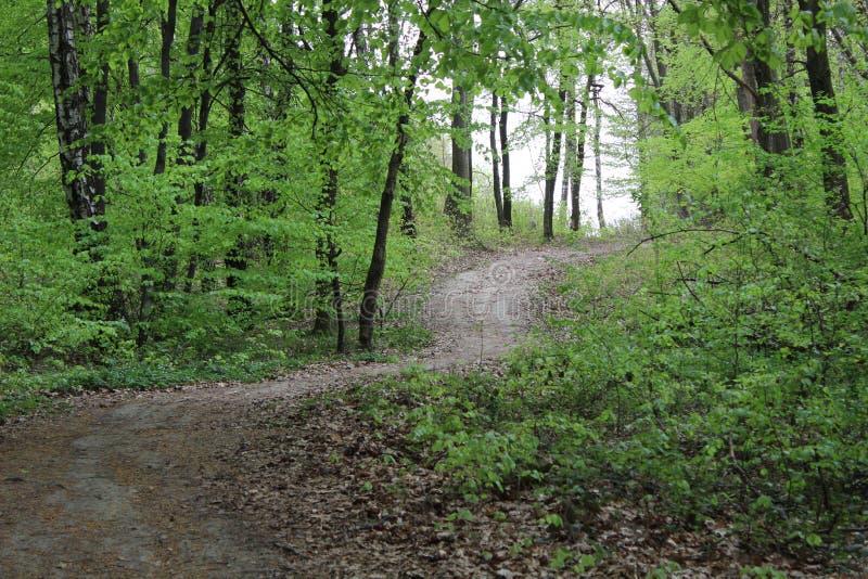 美丽的森林公路 免版税库存图片
