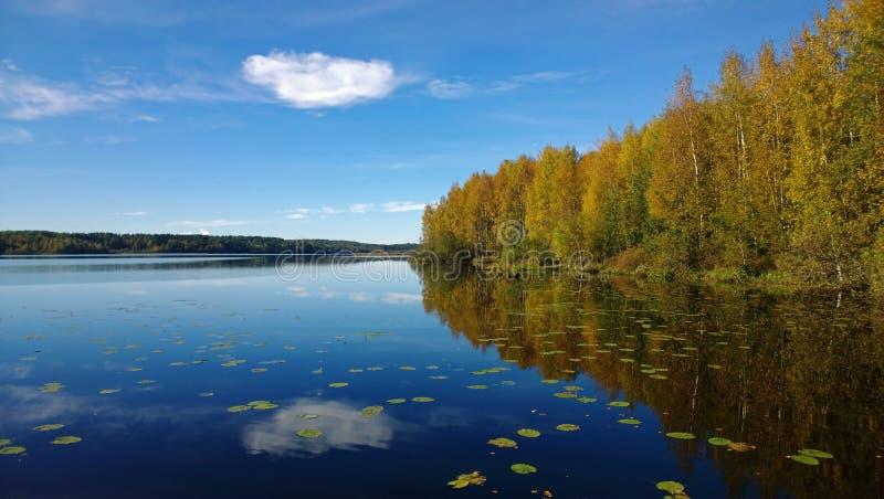 美丽的森林和云彩在镇静湖反射了明亮在秋天 在水浮动荷花 库存图片