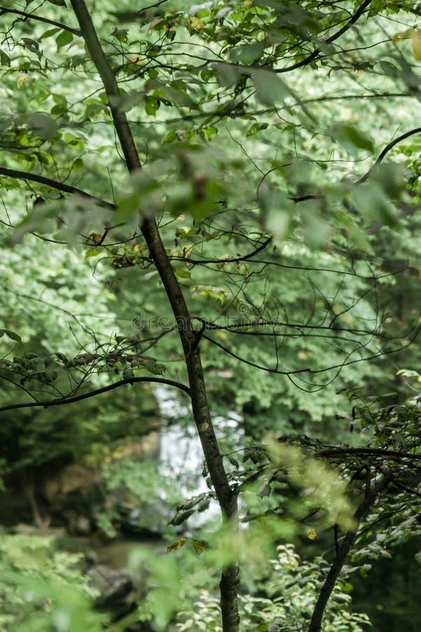 美丽的森林在黑海 库存图片