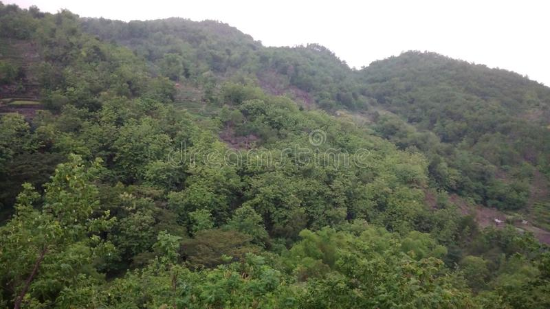 美丽的森林在Gunungkidul 库存图片
