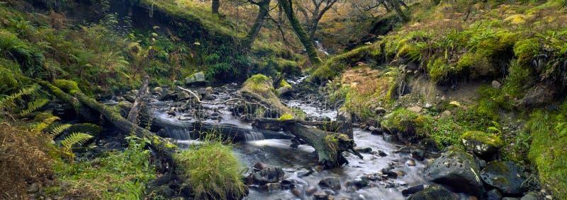 美丽的森林小河 青苔树和青苔石头 小河在国立公园 connemara爱尔兰 库存图片