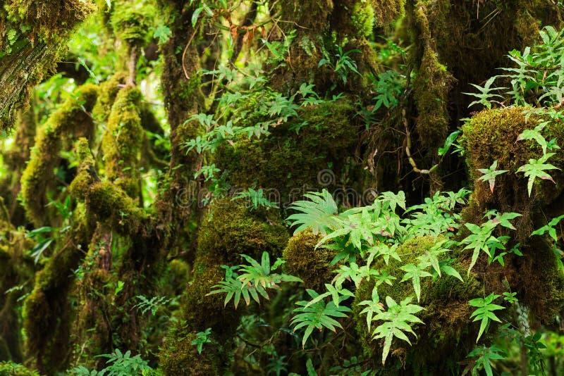 美丽的森林雨 库存图片
