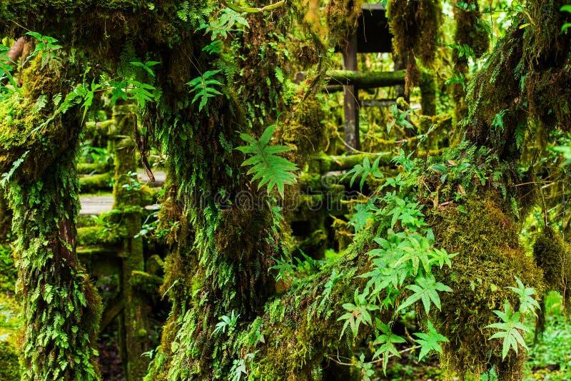 美丽的森林雨 免版税图库摄影