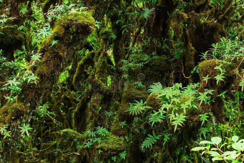 美丽的森林雨 免版税库存图片