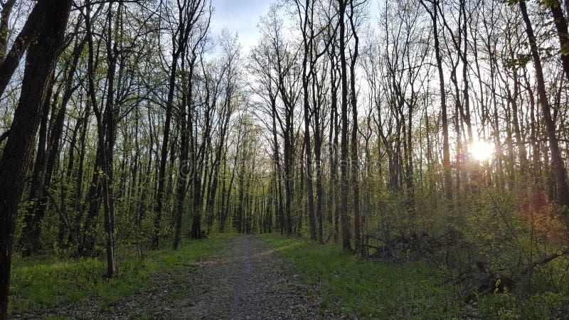 美丽的森林 库存照片