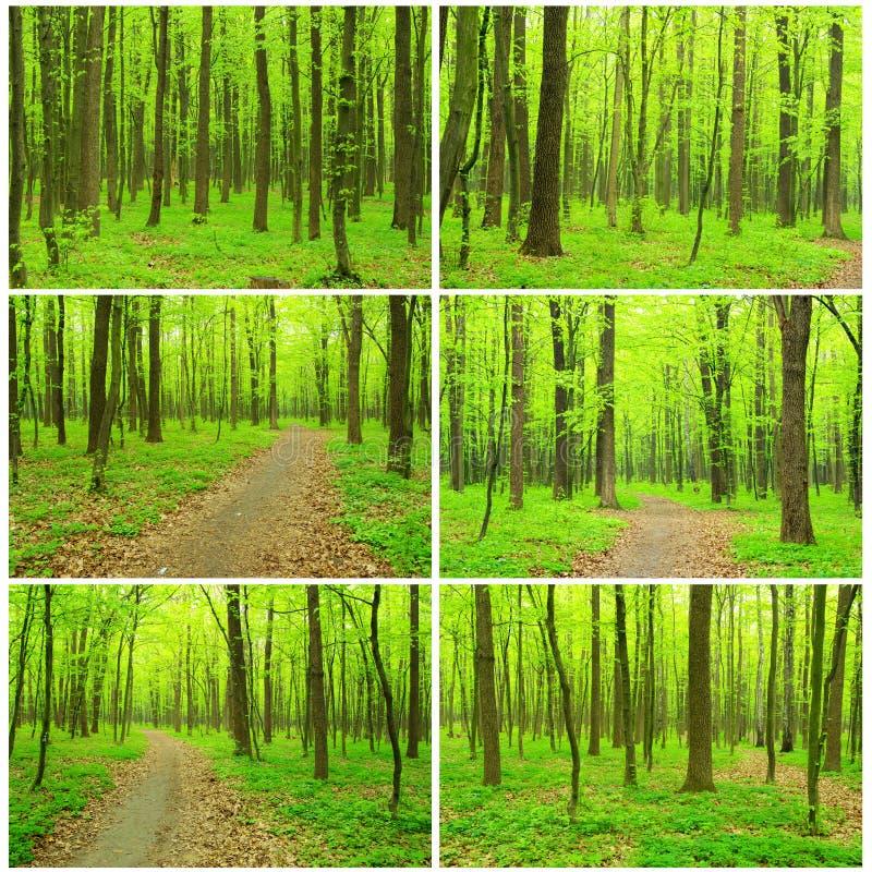 美丽的森林 免版税库存照片