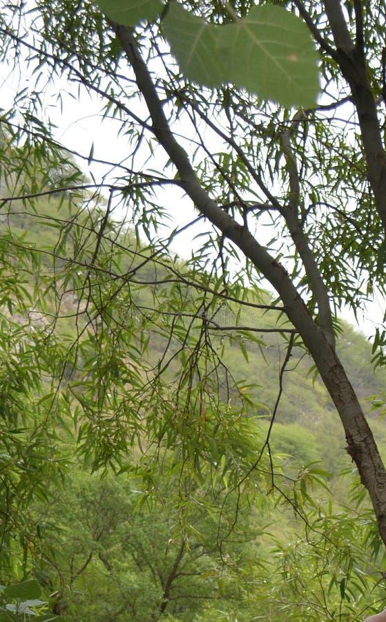 美丽的森林 免版税库存图片