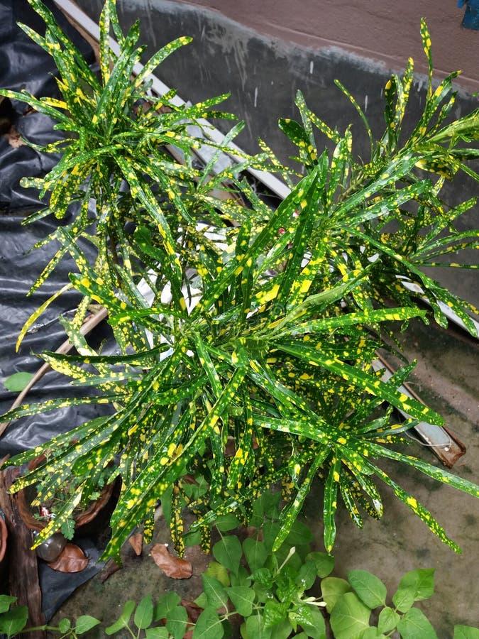 美丽的植物叶子在室外庭院里 库存照片